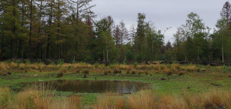 Blean Woods