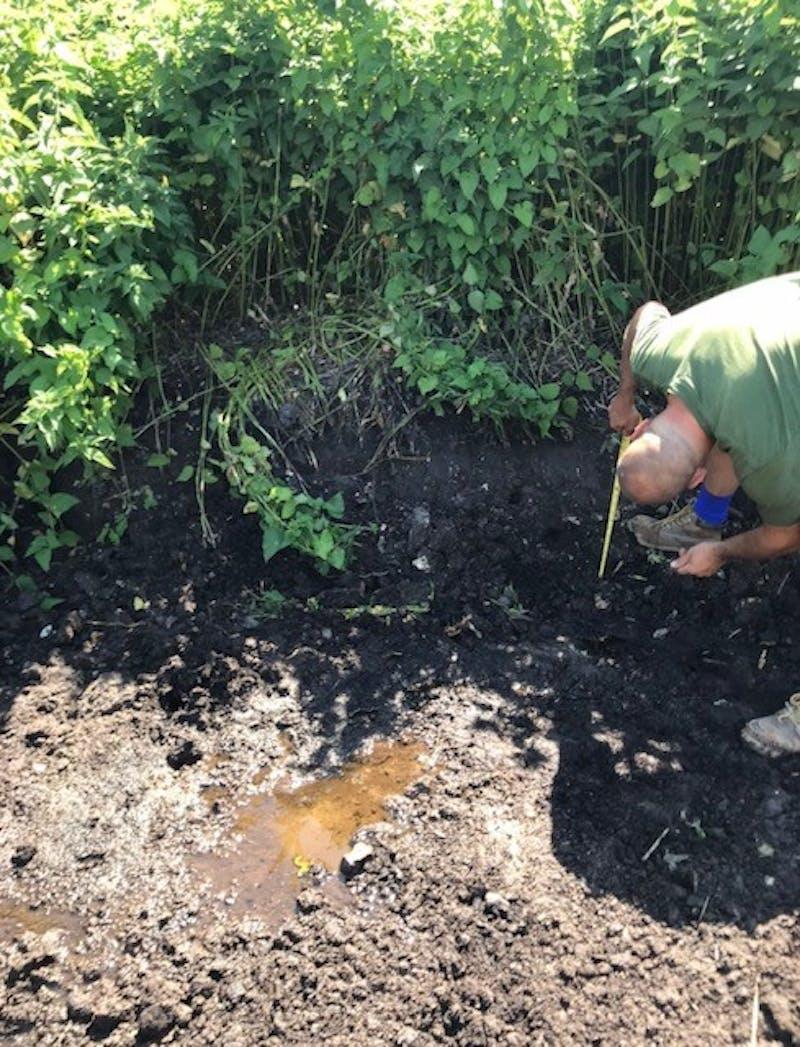 An individual inspecting soil depth