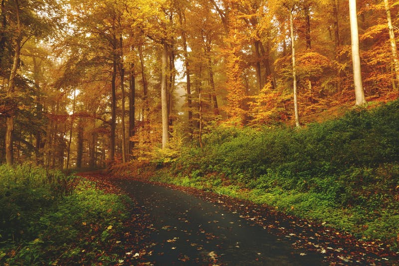 A path through a forest of golden trees