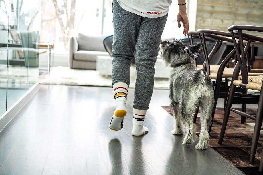 Woman training dog to heel