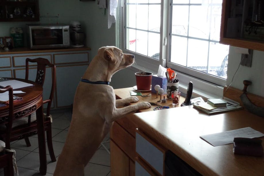 Dog standing on hind legs in home