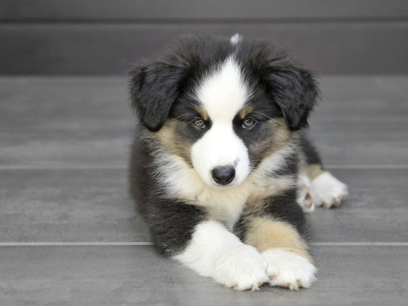 New puppy checklist: 3 tasks to tackle in the first 30 days