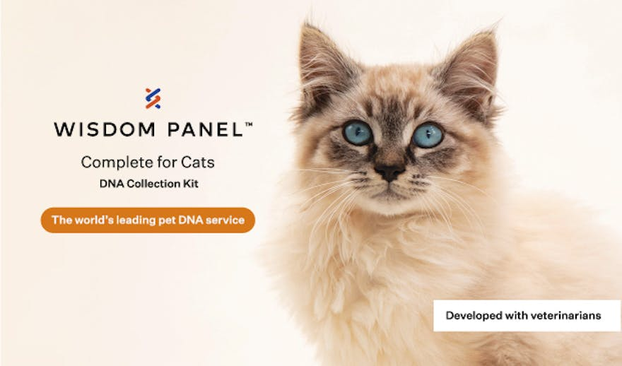 Wisdom Panel™ Complete for Cats DNA collection kit