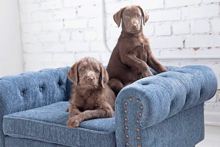 Puppies sitting on La-Z-Boy dog couch