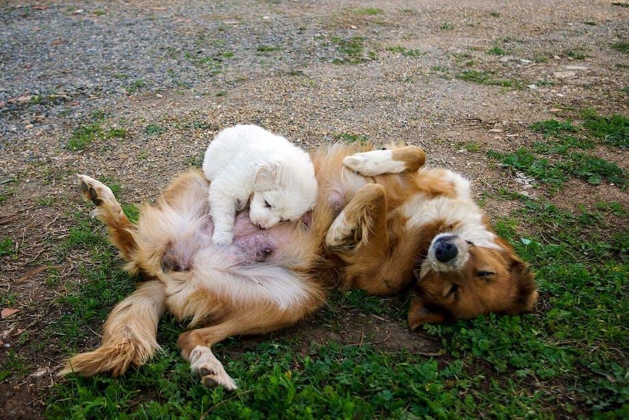 Mother dog feeding her puppy