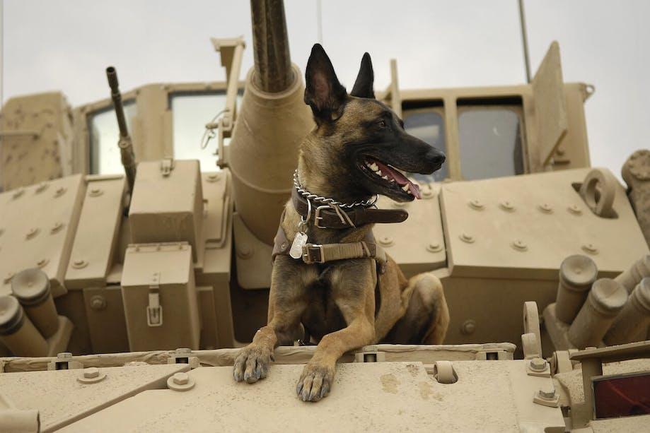 Military dog sitting on tank