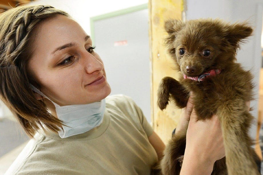 Veterinarian inspecting puppy