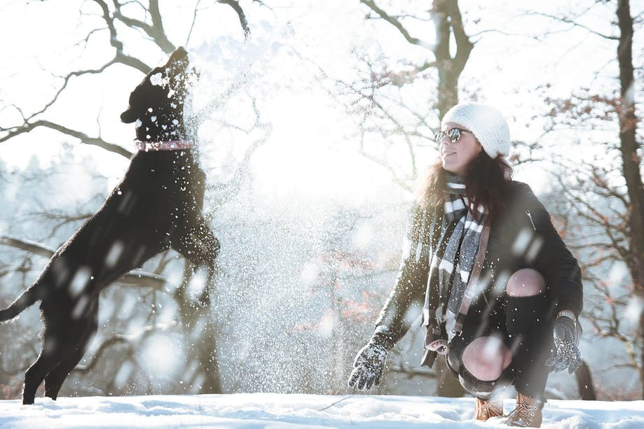 Dog playing in the snow with owner