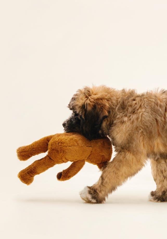 Wisdom Dog DNA