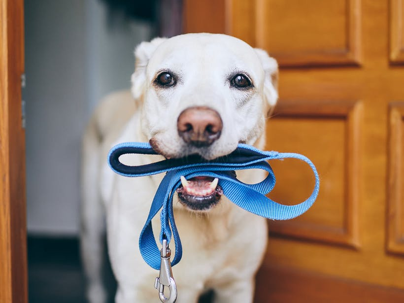 How to Give Your Dog a Longer, Healthier Life (5 Steps)
