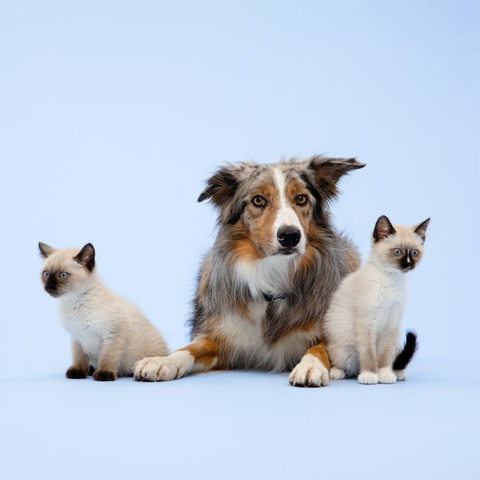 Dog and cats sitting together