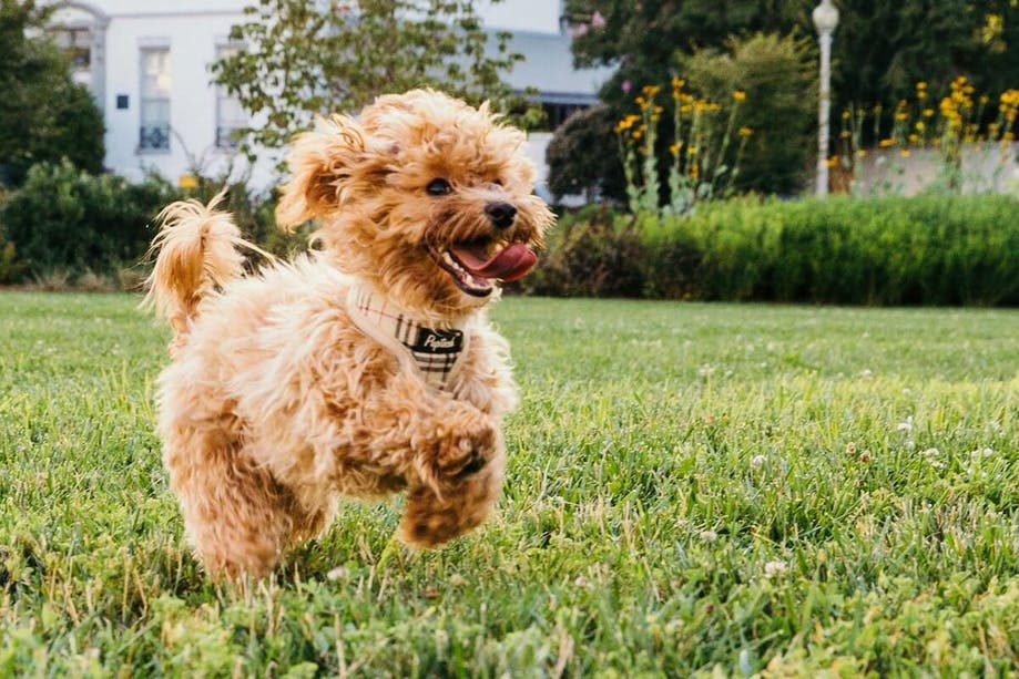 Small dog running outside in yard