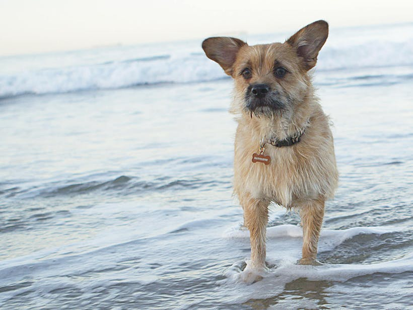 Dog traits: Why your dog is one-of-a-kind