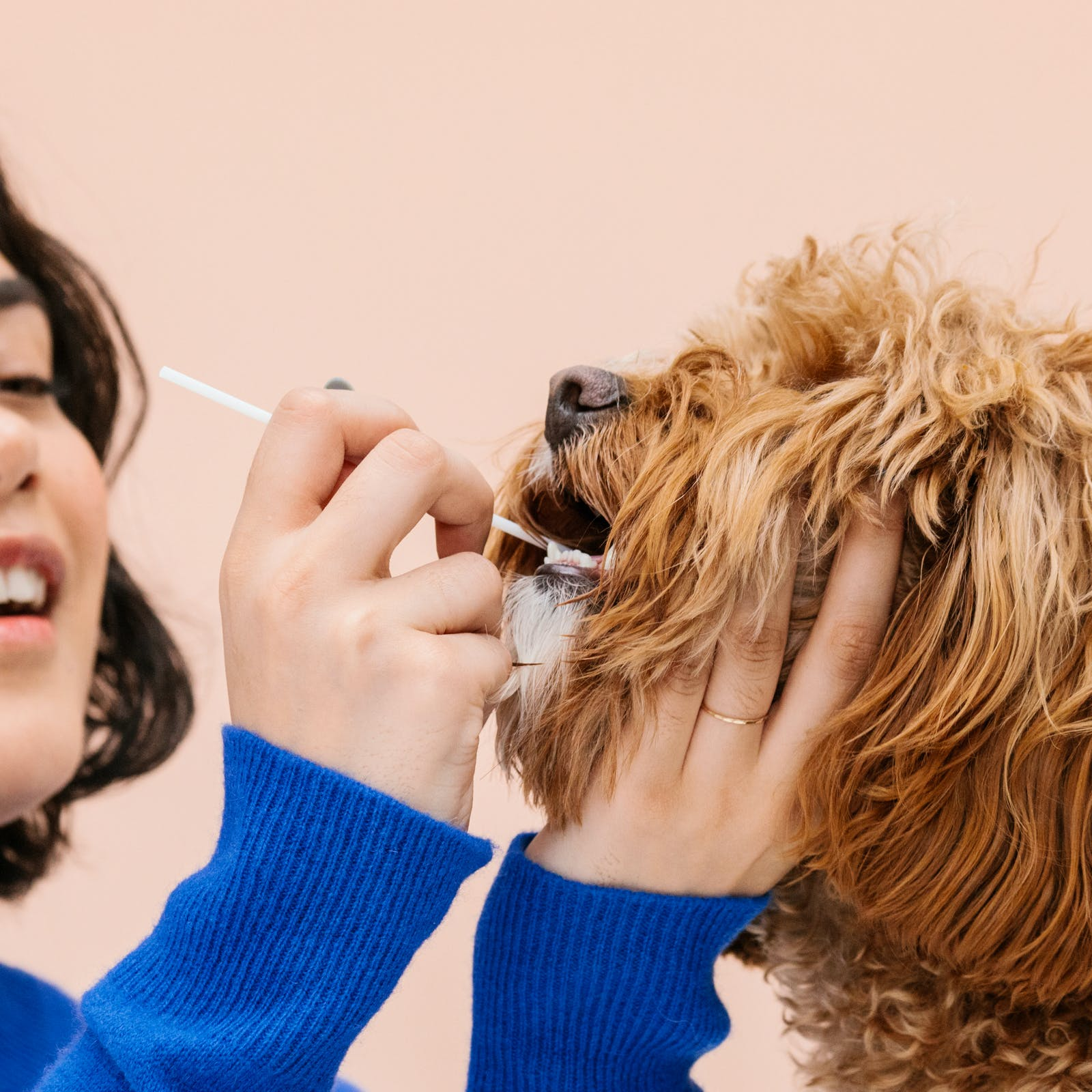 Woman collecting her dog's DNA with Wisdom Panel kit swab