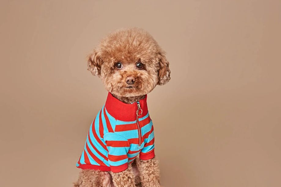 Brown dog wearing a striped sweater
