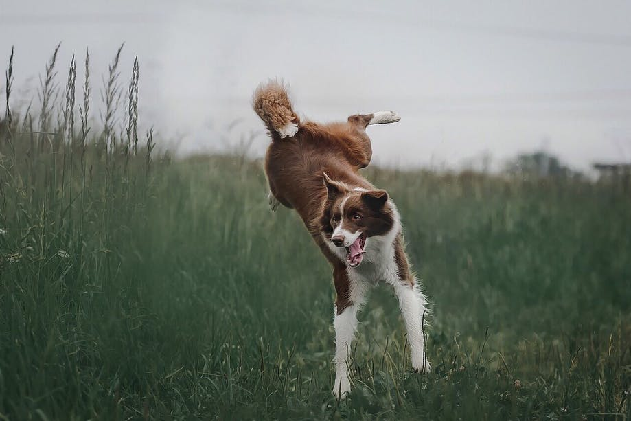 Funny dog jumping