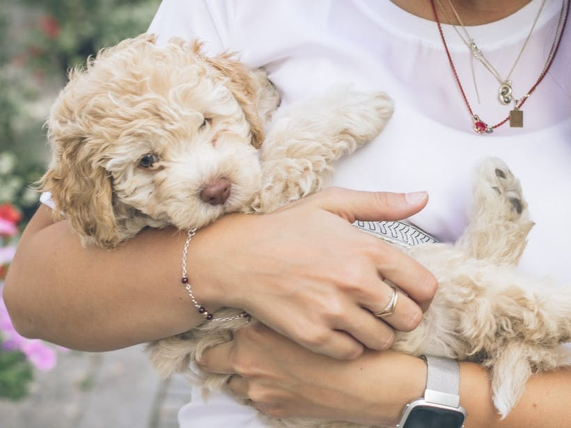 Woman holding foster dog puppy