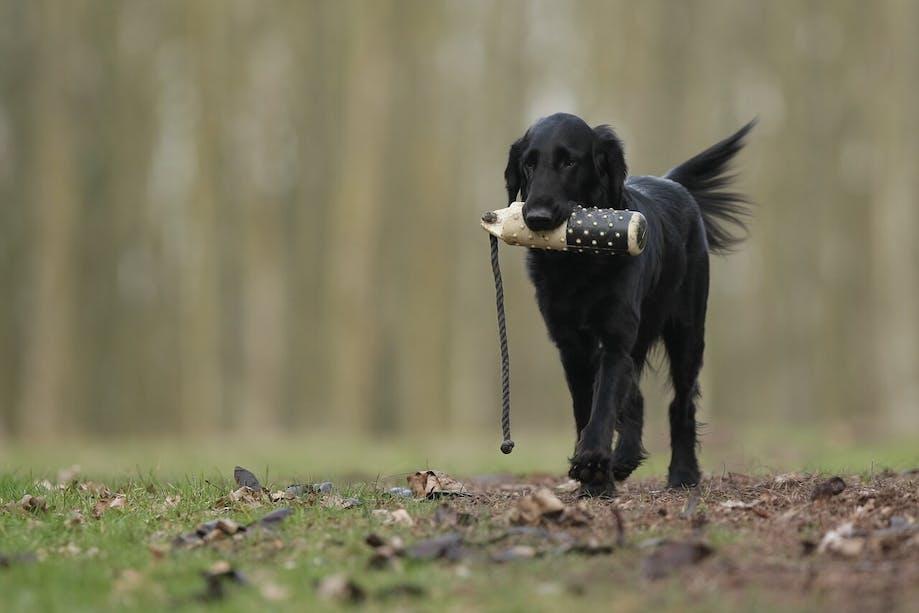 Dog retrieving toy