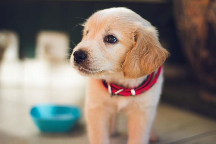puppy next to bowl