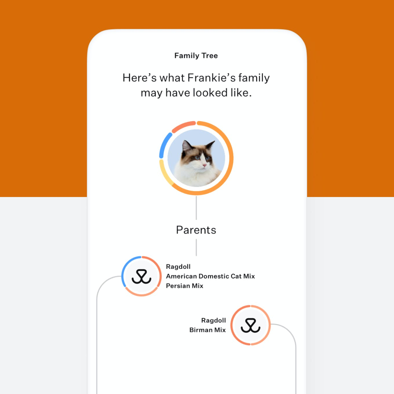 Cat DNA test family tree