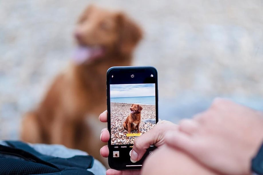 Taking a picture of a dog for a breed identifier app