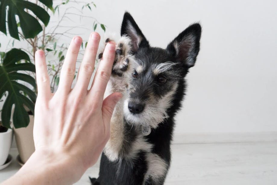 Person giving their dog a high five