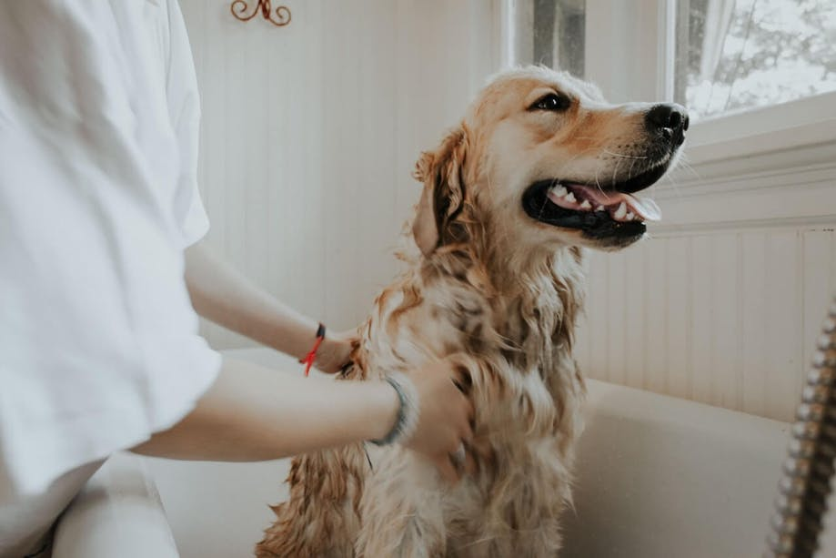 Woman giving her dog a bath