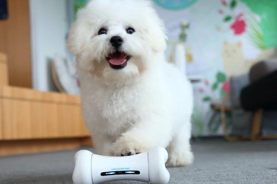 White dog putting paw on Cheerble WickedBone