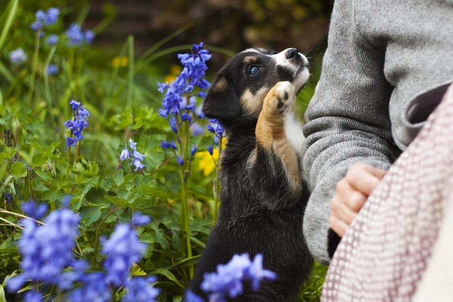 Puppy exploring the outdoors with owner