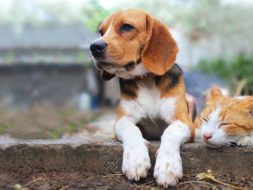 How life for dogs and cats has changed in the last decade [infographic]