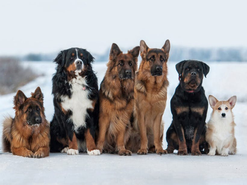 group of dogs standing in the snow