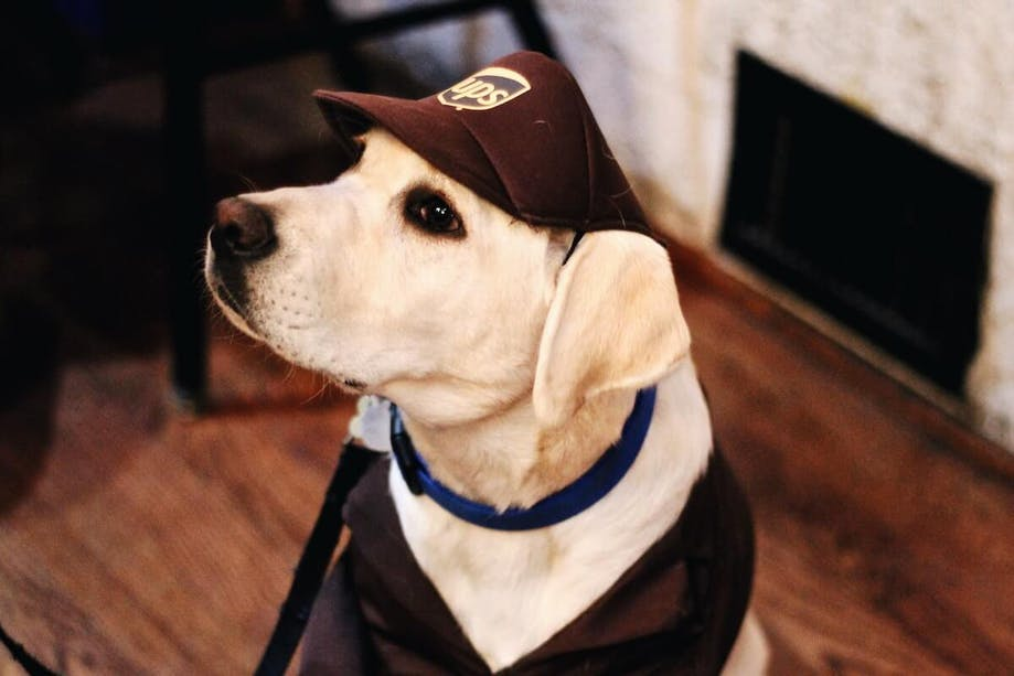 Dog in UPS guy Halloween costume