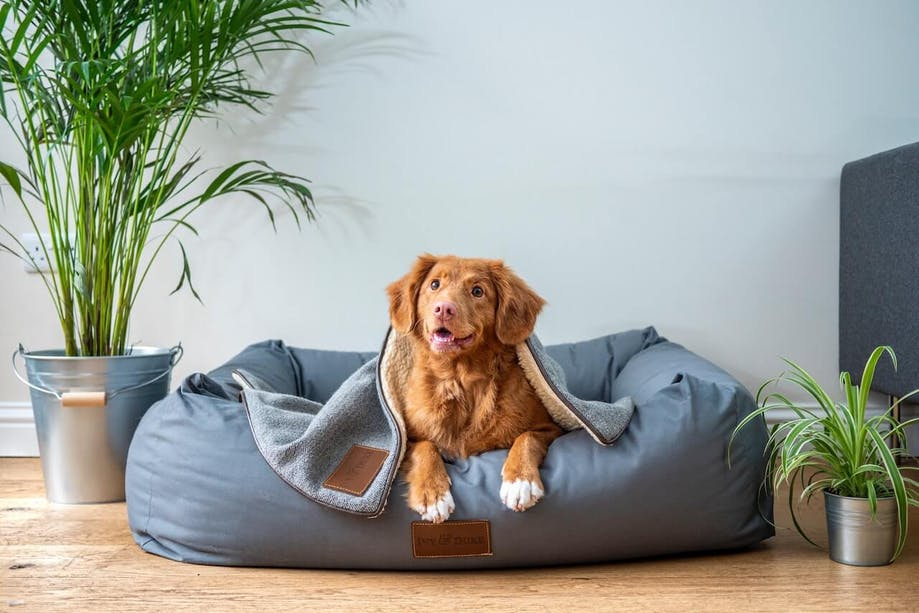 Dog lying in bed at home