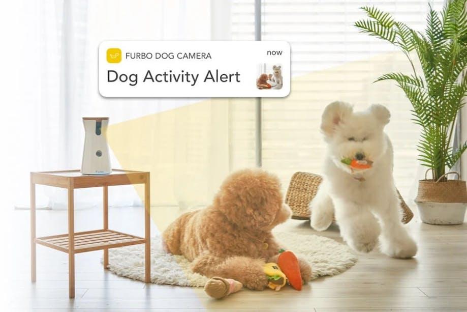 Dogs playing around Furbo Dog Camera