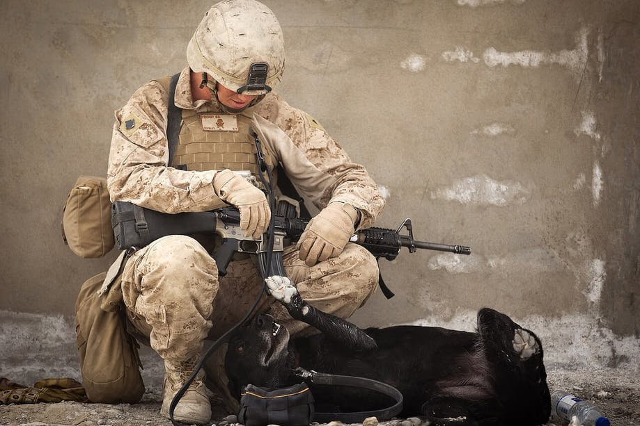 Solider playing with dog