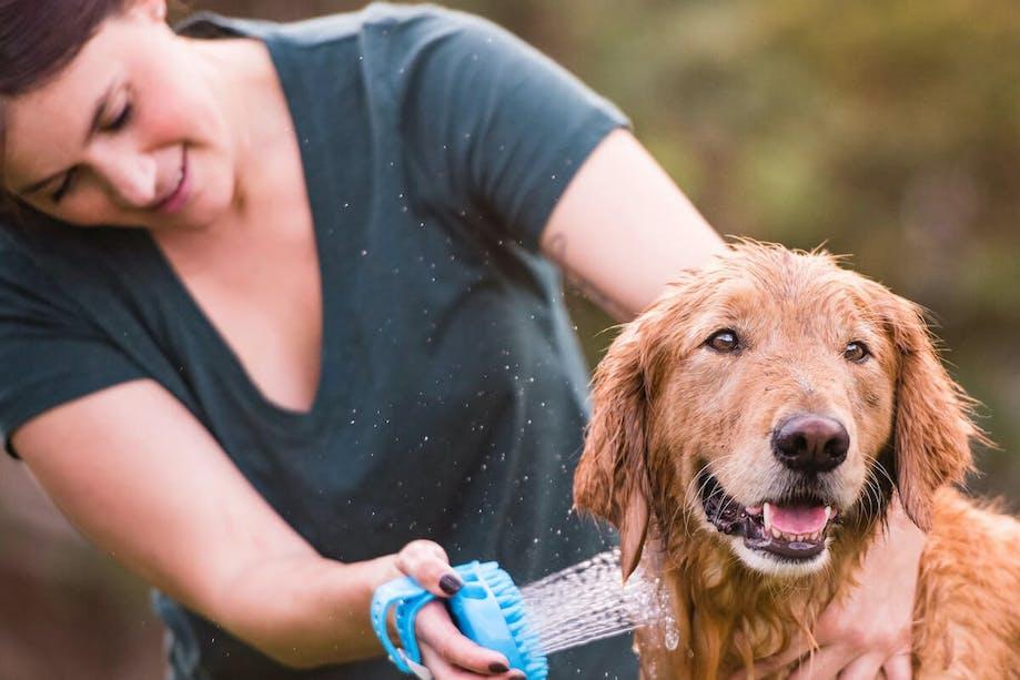 Woman washing her Golden Retriever with AquaPaw