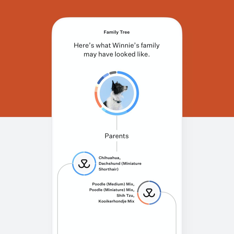 Dog DNA test family tree