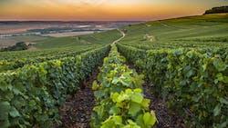WiziFarm accompagne les vignobles pour répondre aux enjeux de demain
