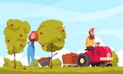 Être saisonnier agricole en 2020 : informations légales, rémunération, types de postes