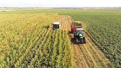 Maïs ensilage et sécheresse : 4 questions /  réponses