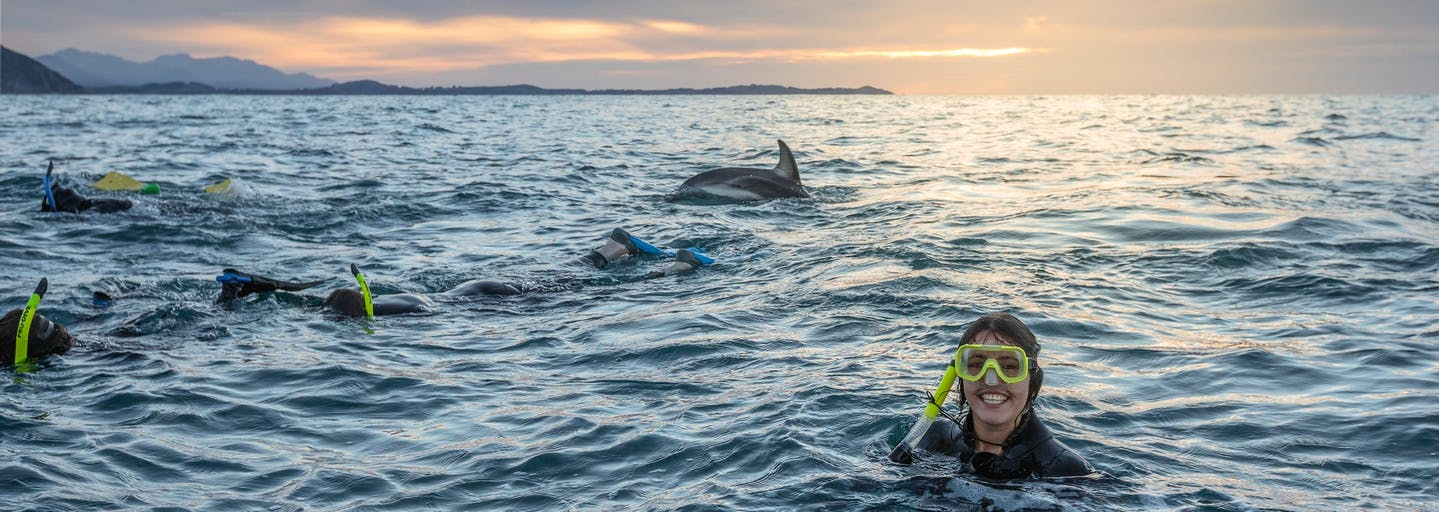 Woman snorkelling in New Zealand with dolphins.