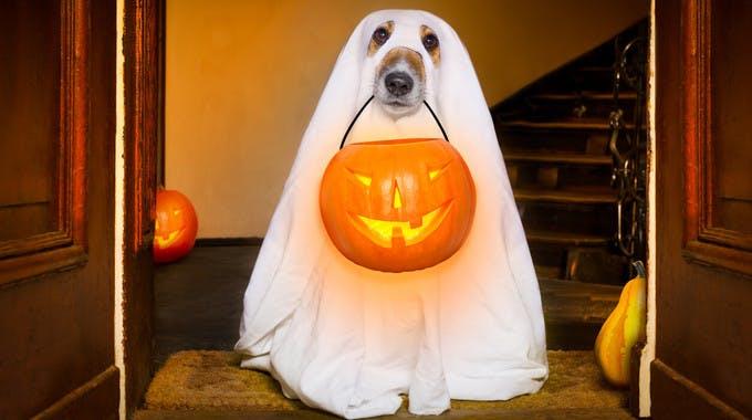 Spartipps Halloween Kostüme