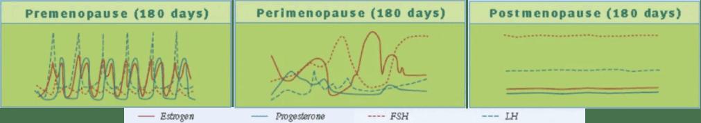 Hormon Veränderungen in der Perimenopause