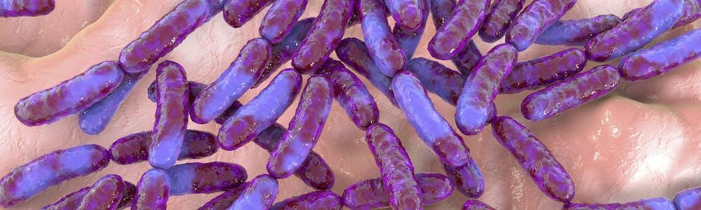 Mikrobiom-scheide-scheidenflora-wechseljahre-darm-laktobazillus