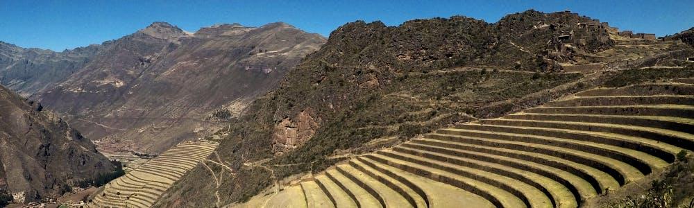 Maca Peru Anden