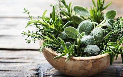 Kräuter, Gewürze, Pflanzenstoffe, gesunde Ernährung, Bitterstoffe