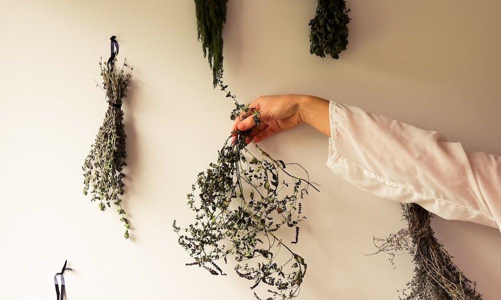 pflanzen-kraeuter-herbs-gewuerze-wechseljahre-perimenopause-phytotherapie