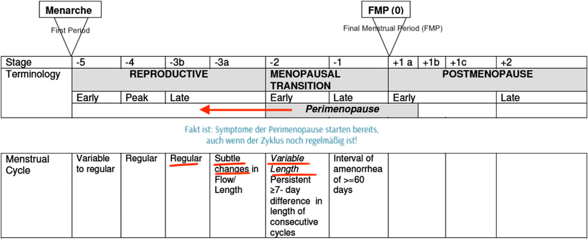 straw-periode-phasen-reproduktiv-perimenopause