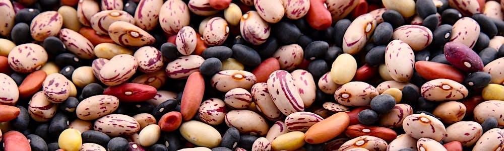 besten Protein Quellen