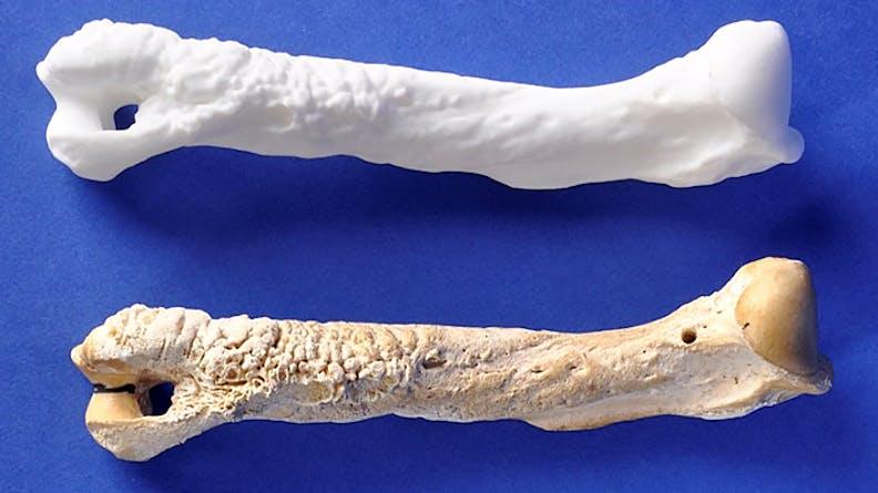 3D printed pet bones
